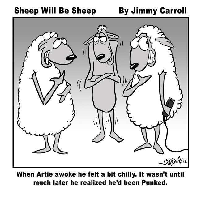 Jimmy Carroll Sheep Will Be Sheep